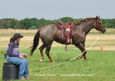 Improve Every Moment with Your Horse Using this Simple Technique
