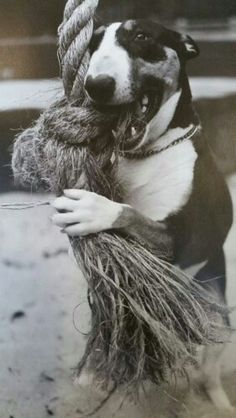 Mmm, rope. My old bull terrier would eat virtually anything which would fit in his mouth, which started me on a life long hobby of litter picking. It was easier to remove rubbish before he saw it than rive it away from him.