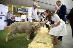 April 18, 2014 -  William & Kate meet Fred the Ram at the Royal Easter Show in Sydney, Australia.