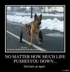 German Shepherd Hero! God bless you! ❤️ #germanshepherd
