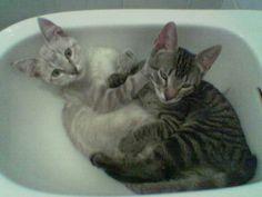 Vamos tomar banho