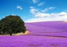 I can just smell the lavender  (Texas)