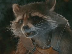 Rocket Raccoon, Racoon, Peter Quill, Guardians Of The Galaxy, Marvel Avengers, Panda, Icons, Friends, Amazing