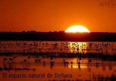 El espacio natural de Doñana. http://arteole.com/blog/el-espacio-natural-de-donana/