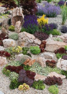 Succulent rock garden with Chick Charms & Sunsparkler Sedums – www.n… - Garden Diy - Succulent rock garden with Chick Charms & Sunsparkler Sedums www.n Succulent rock gar - Succulent Rock Garden, Rock Garden Plants, Succulent Landscaping, Succulents Garden, Garden Types, Succulent Care, Garden Planters, Herb Garden, Small Front Yard Landscaping