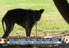 """An Ohio pet owner who allegedly left his starving, flea-infested animal tied to a tree for four years defended his actions by saying, """"The dog is not a human."""" Jeremy Shane Tempe was arrested at his Middletown home on Sept. 27 after cops were told that the pooch was being mistreated at the property."""
