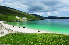 Beauty: The Machair - which means low lying grassland - and cows on the beach in the Outer Hebrides