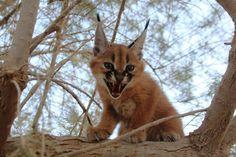 צילום: שי קבסה, רשות הטבע והגנים