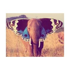 hipster photography | Tumblr found on Polyvore