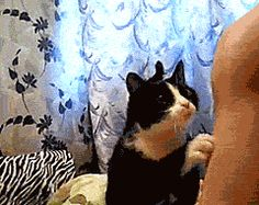 Oh love! :) Kitten Begs For Attention Using All Of His Tricks