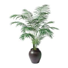 "The Areca palm tree is the very best air purifying plant according to the ratings from NASA's research and has the 8th highest removal rate for Formaldehyde according to Dr Wolverton's data. This house plant was referred to as ""the most effective air humidifier"" by MetaEfficient.com. The Areca has the ability to  maintain your office or home moist throughout dry periods as well as continually removing chemical toxins from your air. In the course of the winter season, it's so effective at…"