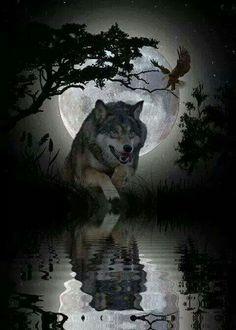 79 Mejores Imágenes De Lobos