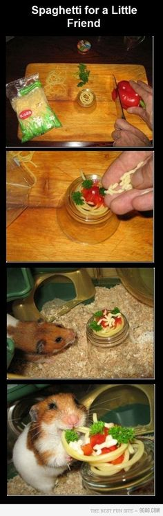 The last picture is the best. He's so happy! ~ my future kids will have a hamster, they are great pets