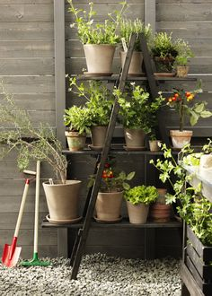A Greenhouse Set for Both Amateur as well as Specialist Garden Enthusiasts – Greenhouse Design Ideas Garden Landscape Design, Garden Landscaping, Potted Plants, Garden Plants, Container Gardening, Gardening Tips, Plant Shelves, Natural Garden, Small Gardens