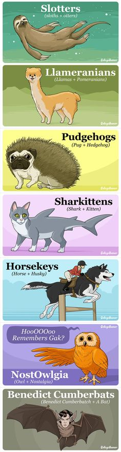Animal hybrids that would break the internet if they existed…