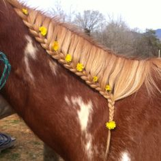 simple horse braid done by Horse Mane Braids, Horse Hair Braiding, All The Pretty Horses, Beautiful Horses, Animals Beautiful, Cute Horses, Horse Love, Horse Photos, Horse Pictures