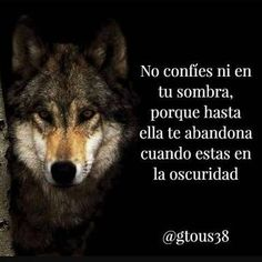 Resultado de imagen para lobo frases Wolf Quotes, Animal Quotes, Qoutes, Life Quotes, Wolf Pictures, Harvey Specter, Self Motivation, Lone Wolf, Spanish Quotes