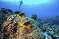 """Full-Day Catalina Island Scuba Diving Tour from La Romana Welcome aboard and scuba dive two """"must see"""" dive sites and the most beautiful underwater ecosystem of the Dominican Republic with a full day, all inclusive tour to Catalina Island. Experience clear turquoise waters, incredible coral formations, fish life and ultimate relaxation in paradise on a private beach. Enjoy the cool breeze and selection of refreshments at our bar overlooking the ocean and a Dominican feast p..."""