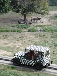 Remember when the Fort Wayne Children's Zoo had the Safari Jeep ride through the African Journey?