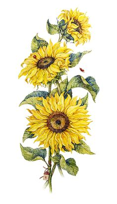 Love the idea of the layered flowers and ladybugs, would also like bumble bees! Sunflower Drawing, Sunflower Tattoos, Sunflower Print, Sunflower Illustration, Botanical Illustration, Watercolor Illustration, Watercolor Flowers, Watercolor Paintings, Bumble Bee Tattoo