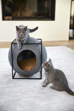 Tyylihuonekaluja kissoille suoraan Pariisista