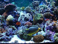 Saltwater fish tank. Wish ours looked this nice!