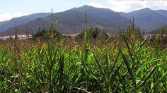 ¡Qué verde es el valle en Fondón! La Alpujarra
