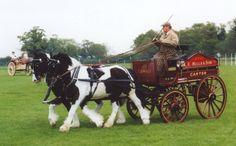 kutsche mit pferden   Das Kutschpferd und dessen Grundausbildung