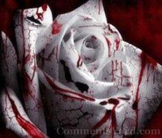 Gothic  - Blood on White Rose