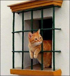 Gato en la ventana ...