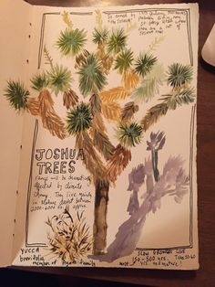just a quick post from the desert to share my latest sketchbookery! so many lovely cacti in the yard that have me opening up my watercolor & gouache boxes and grabbing a juicy brush. my fan palm has Tree Watercolor Painting, Easy Watercolor, Gouache Painting, Floral Watercolor, Tree Drawing Simple, Tree Sketches, Fabric Postcards, Desert Plants, Nature Journal