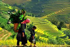 Sapa is a frontier town and capital of Sa Pa District in Lao Cai Province in northwest Vietnam. It was first inhabited by people we know nothing about. Sa Pa, Visit Vietnam, Vietnam Tours, Vietnam Travel, Vietnam Destinations, North Vietnam, Vietnam Vacation, Asia Travel, Hoi An