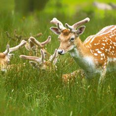Deers family - yellow beauty spring color flower sun light animals summer beautiful animal family green wildlife deer wild natural light team wildlife photographer animal photography nature photography wildlife photography nature photograph nature pics Animal Photograph Animal Pics Wildlife Pics Wildlife Photograph