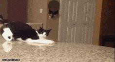 Crazy cat devil walk fall