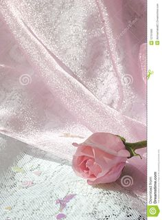 pink-rose-bud-shiny-pink-tulle-over-white-lace
