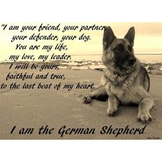 The German Shepherd....  He is a real friend, real partner, real companion