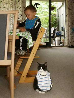 Cat wearing a bib.