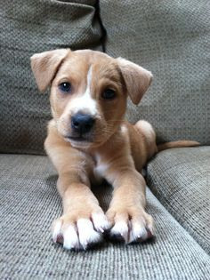 Cute Little Pup
