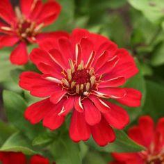 10 πανέμορφα φυτά για ζαρντινιέρες που ομορφαίνουν το μπαλκόνι! Home And Garden, Balcony Ideas, Window Boxes, Diy Tutorial, Hacks, Google, Gardens, Diy, Plants