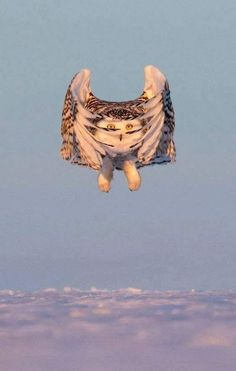 Outstanding 21 Greatest Owl Pictures You'll Ever See https://meowlogy.com/2018/01/24/21-greatest-owl-pictures-youll-ever-see/ Frequently, people wind up giving up their parrots because the birds are not able to talk