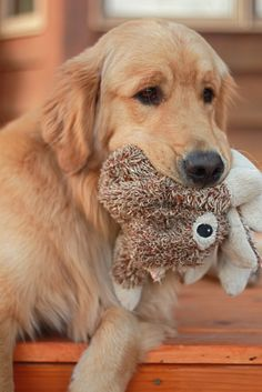 Never underestimate the comfort of a plush toy while you wait for your human.