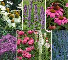 Hummingbird-Butterfly Garden! Enjoy colorful blooms, birds, and butterflies all summer long with an easy care perennial garden for a sunny location. Hummingbirds and butterflies will flock to the nectar in lavender-blue Catmint (Nepeta faassenii), pink and white Coneflowers (Echinacea 'Magnus' and 'White Swan'), white Gayfeather (Liatris spicata 'Alba'), compact Bee Balm (Monarda 'Pink Lace'), 30-inch-tall, mauve-purple Joe Pye Weed (Eupatorium 'Baby Joe') and aromatic Agastache 'Blue Fortune'.