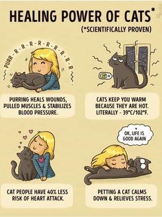 Healing Power of Cats I Love Cats, Cute Cats, Funny Cats, Cats Humor, Funny Horses, Funny Animal, Crazy Cat Lady, Crazy Cats, Kittens Cutest