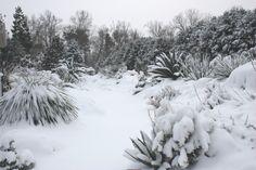 JLBG Alpine Garden in Snow - North