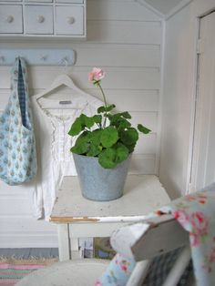 Geraniums in the softest pink