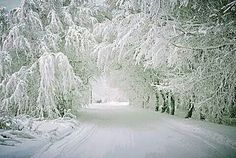 tunnel of trees, near petoskey, mi
