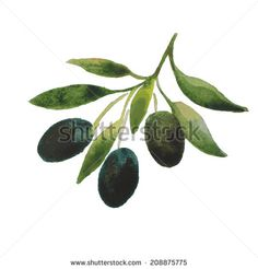 vector watercolor olive oil branches. colorful backdrop. hand drawn painting for cooking, vegetarian, menu, organic, raw food illustration. Italy, Greece, Mediterranean cuisine - stock vector