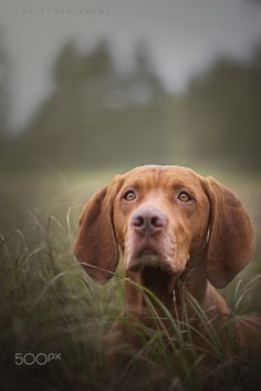 Best Friend by Christoph Eberl on 500px