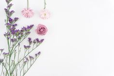 Floral composition on white background Free Photo
