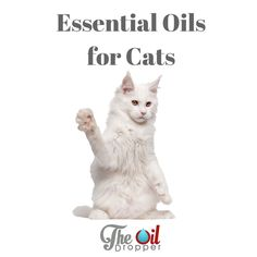 let 39 s be sure to keep our furry family members safe this is a great list of essential oils that. Black Bedroom Furniture Sets. Home Design Ideas